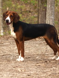 Our Review of Hamilton…the Dog Breed