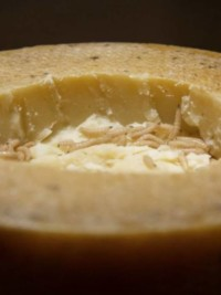 Maggot Cheese? Disgusting Food Museum Ready For Debut