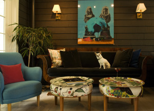 Cozy lounge with a relaxing Chihuahua. Credit: The Maidstone Hotel