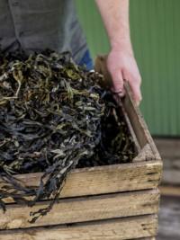 Sweden Sells Seaweed By The Seashore