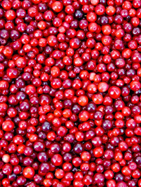 For the Love of Lingonberries