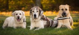 In The News: Get a Dog, Live Longer