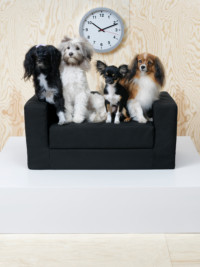 In The News: IKEA Launches Pet Product Line
