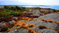 Freedom to Roam: Sweden's Allemansrätten