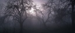 Six Swedish Horror Movies To Binge This Halloween